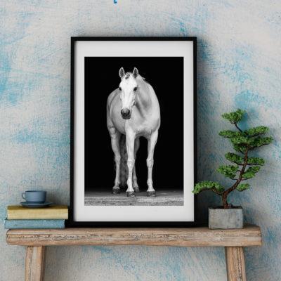 Hästtavla porträtt lusitanosto